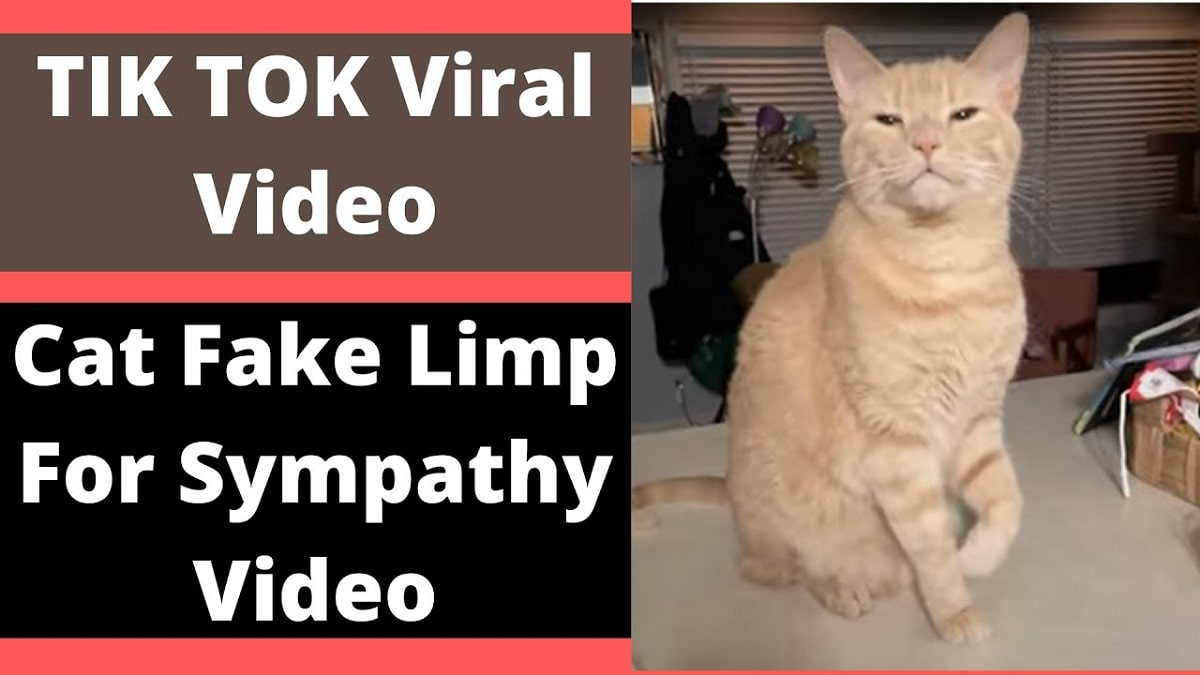Cat Fakes Limp For Sympathy Goes Viral
